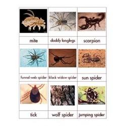 Arachnid Nomenclature Cards